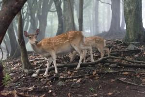 下山途中で鹿に遭遇